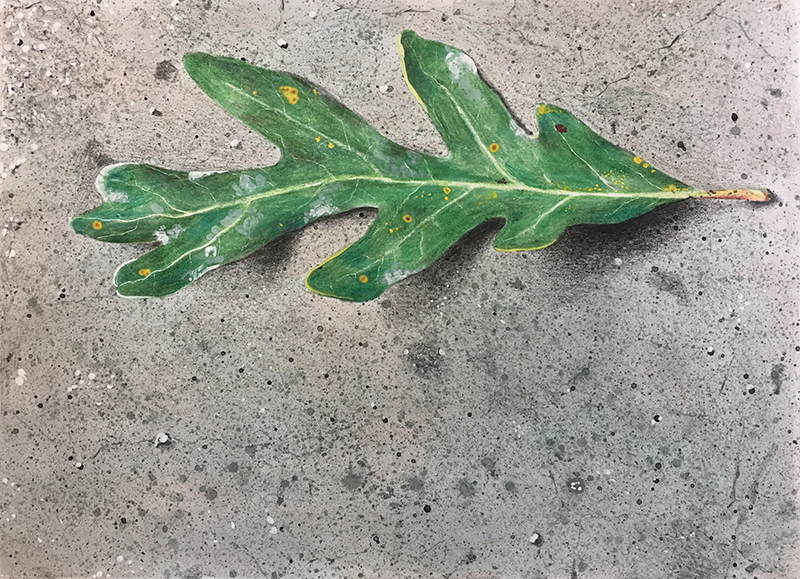 Mixed media drawing of a leaf