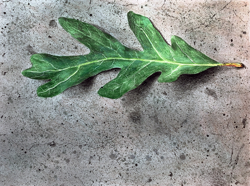 Adjusting values on the leaf with colored pencils