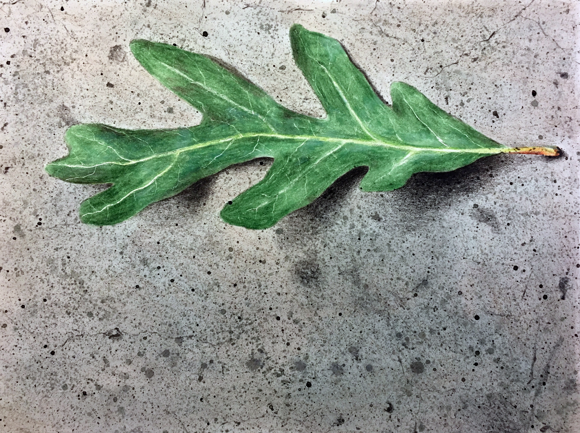 Using a colorless blender on the colored pencil applications on the leaf