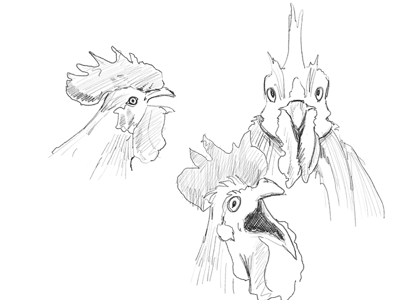 Sketch of roosters