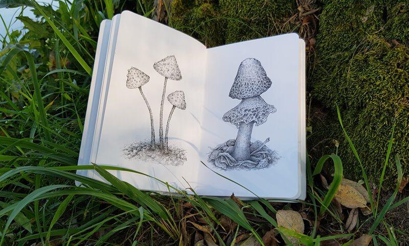Mushroom drawings in a sketchbook