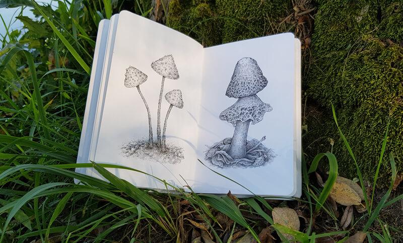 Mushroom drawings in a sketchbook