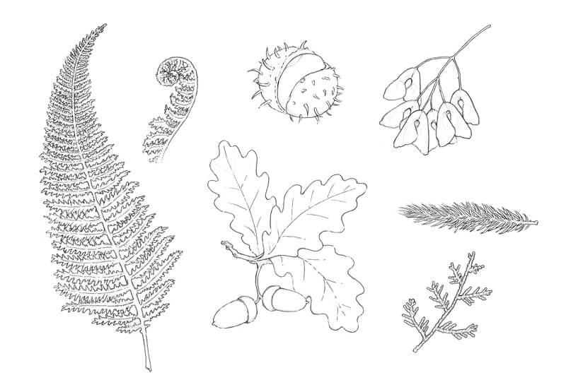 Outlining objects from nature with ink