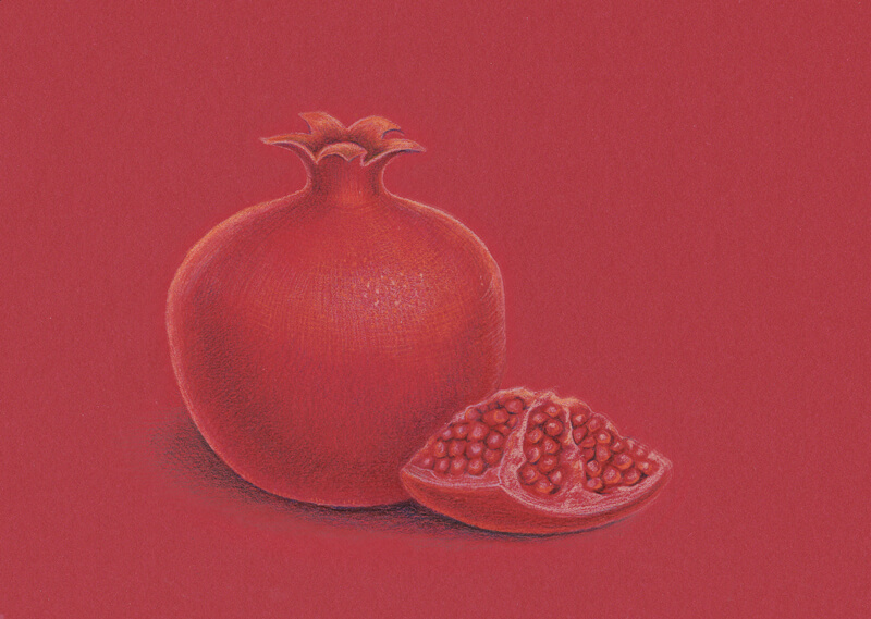 Colored pencil drawing of a pomegranate
