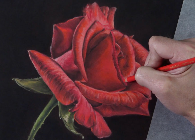 Adding the finishing touches to the rose drawing