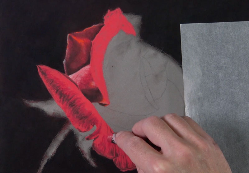 Drawing new petals on the rose