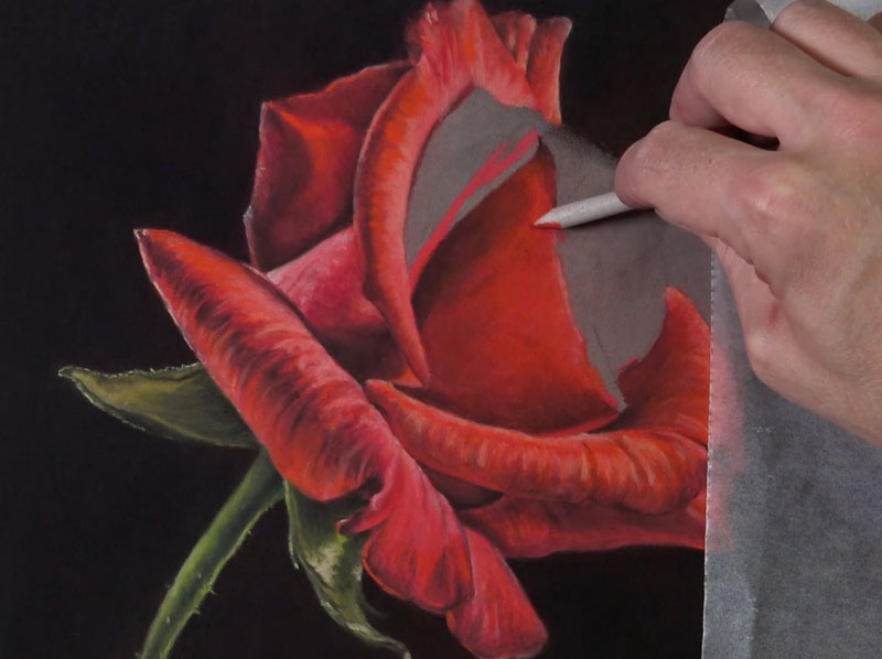 Contour Line Drawing Rose : How to draw a rose pastels