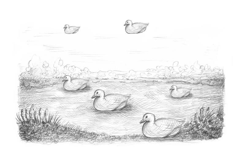 Ducks on a pond drawing