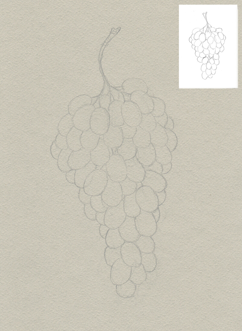 Contour line drawing of the grapes