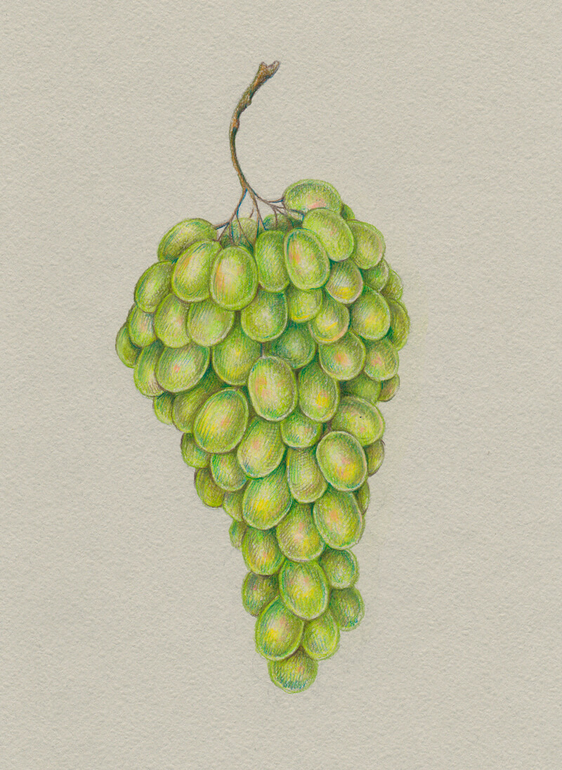 Add yellow and pink to the grapes