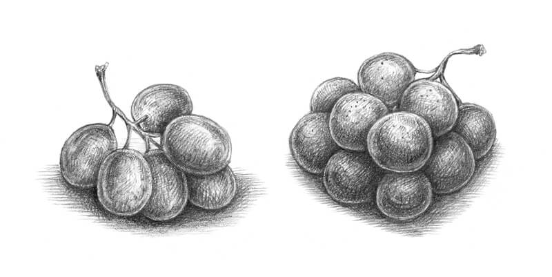 Graphite sketch of grapes