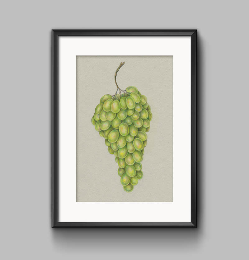 Framed drawing of grapes with colored pencils