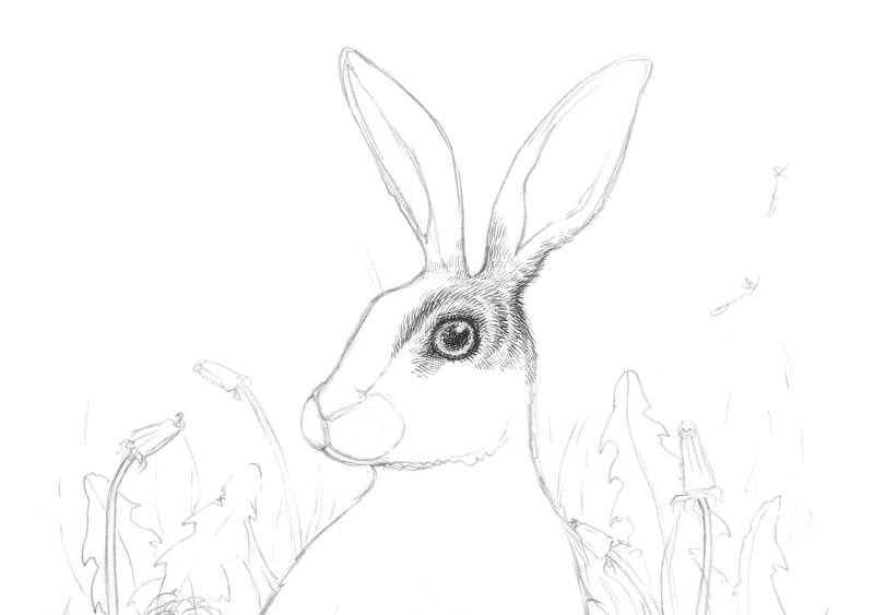 Drawing the fur around the eye of the rabbit