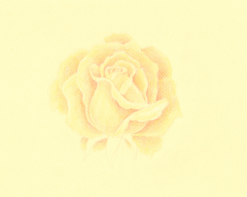 Adding lighter tones to the rose