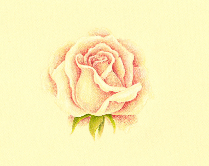 Adding greens to the rose drawing