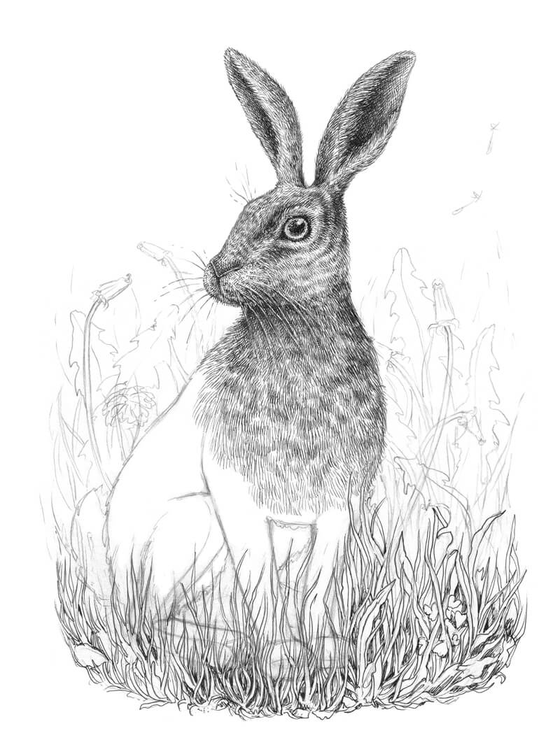 Drawing the grass in front of the rabbit