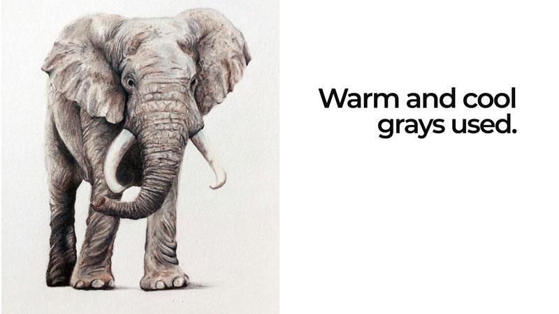 Colored pencil drawing with cool and warm grays