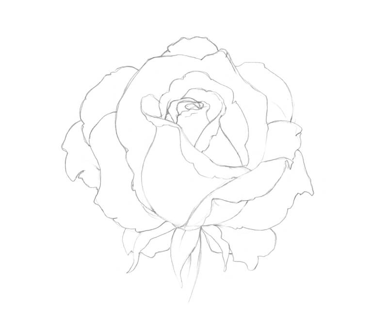 Completed sketch of the outlines of the rose