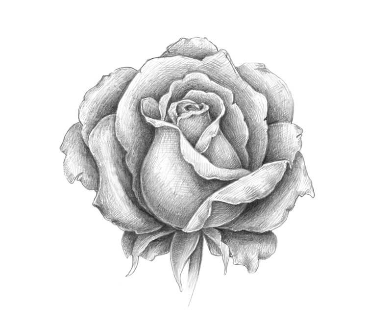 Pencil Sketch of a Rose