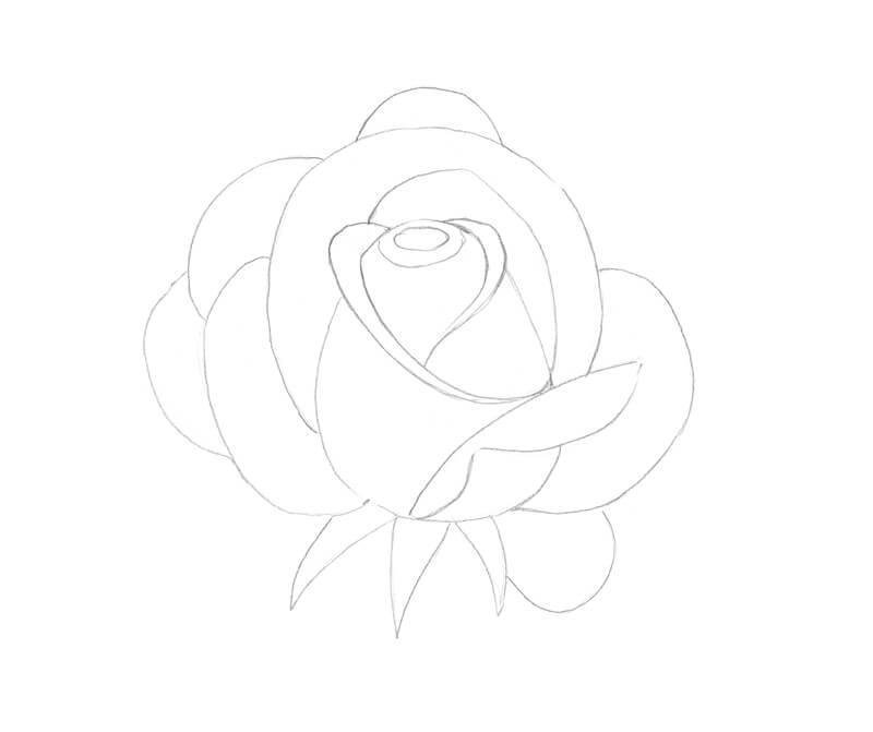 Contour sketch of a rose
