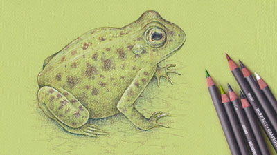 How to Draw a Frog with Graphitint Pencils