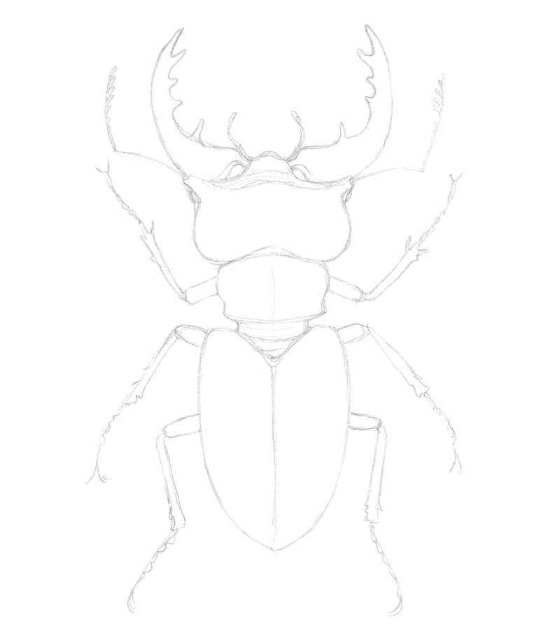 Simplifying the legs of the beetle