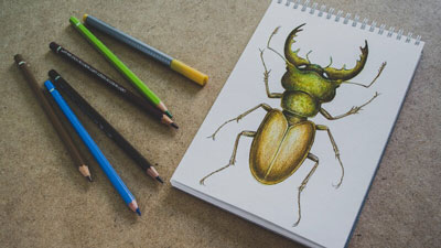 How to draw a stag beetle - Mixed Media Lesson