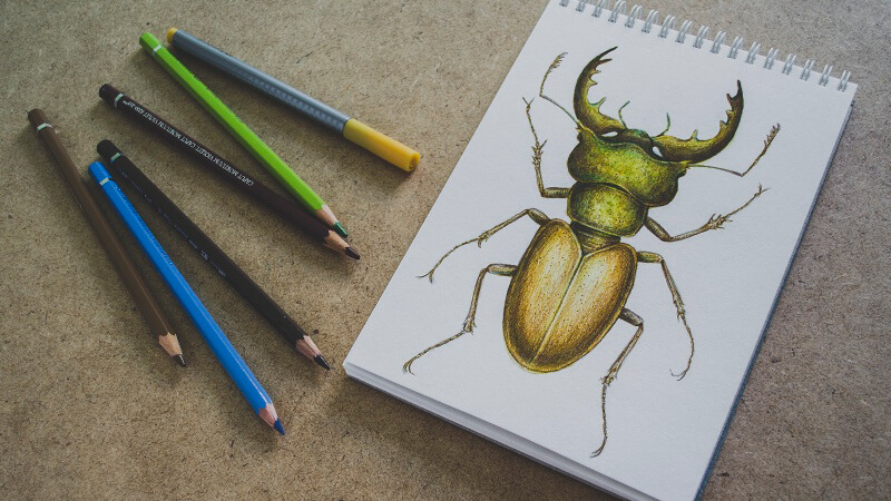 How to Draw a stag beetle with watercolor, watercolor pencils, and ink