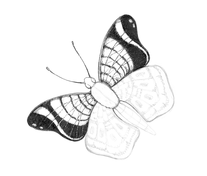 Outlining the darker spots on the butterfly with ink