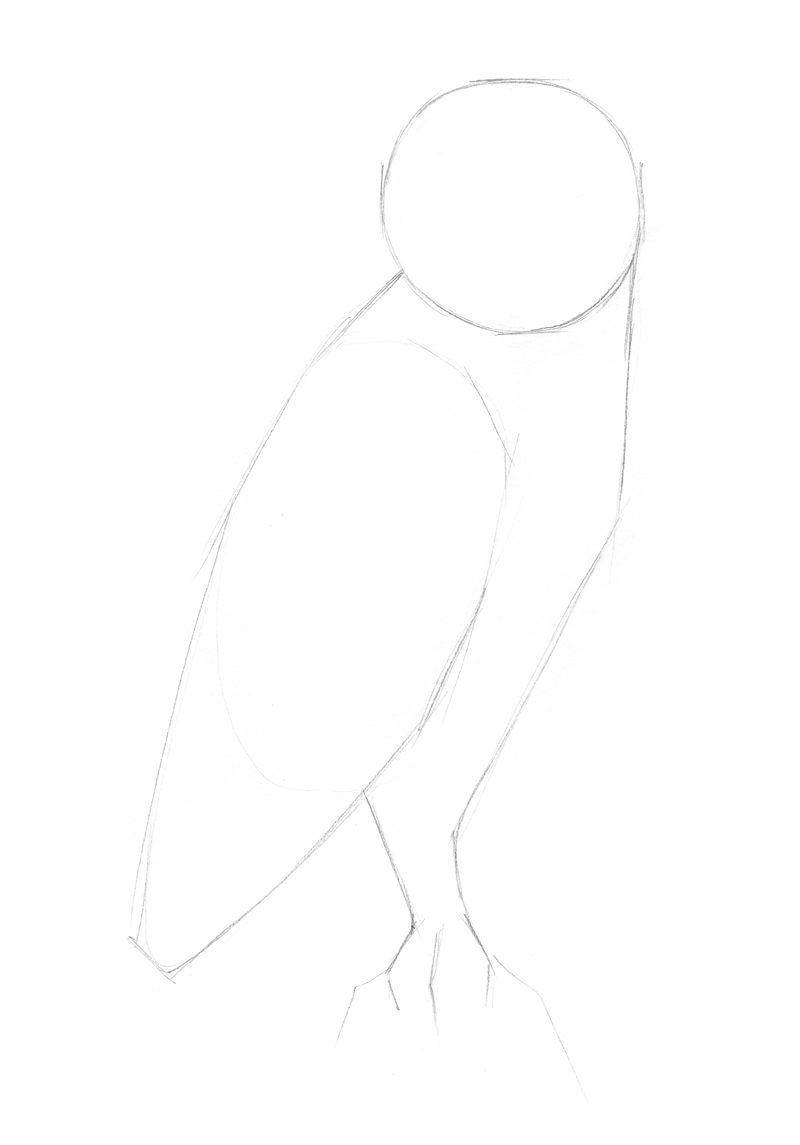 Sketching the body of the owl