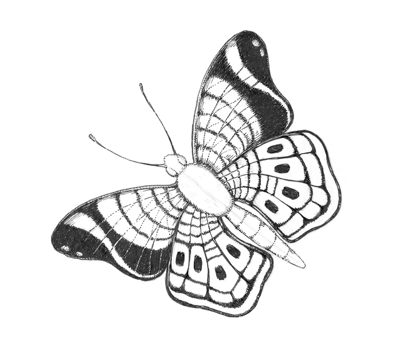 Adding ink to the wings of the butterfly