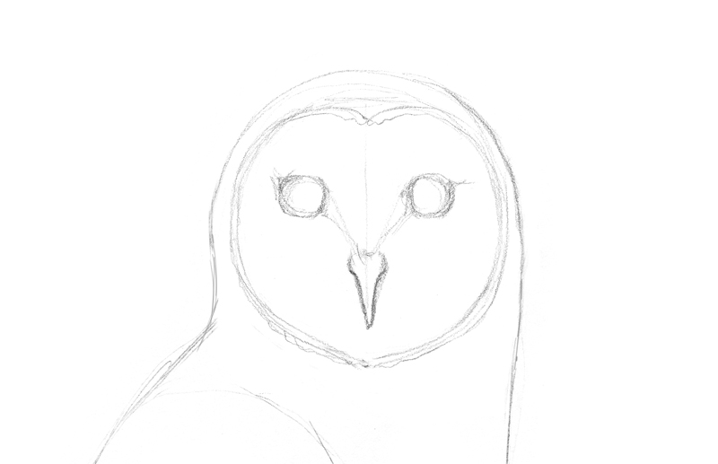 Draw the head of an owl