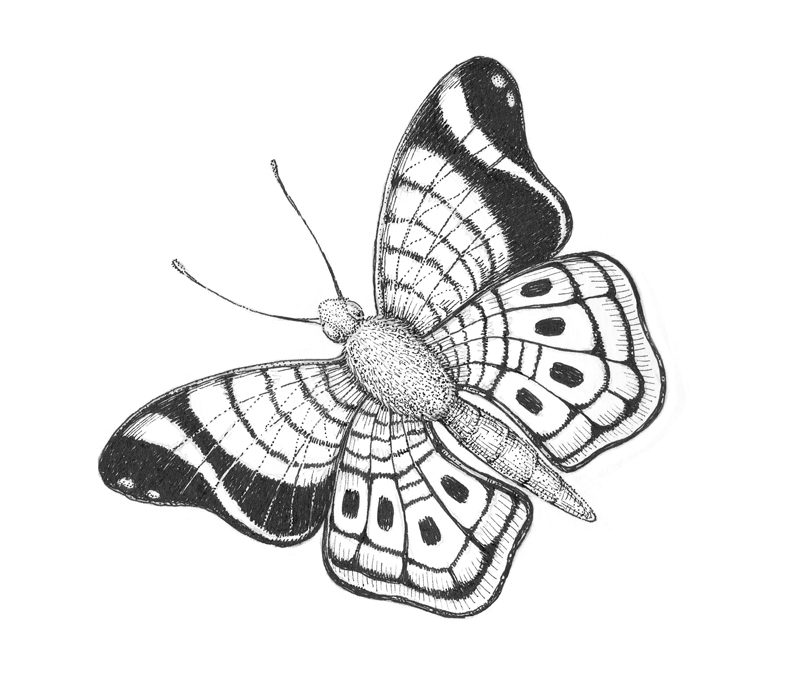 Creating texture on the butterfly with ink