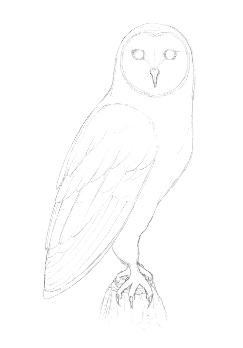 Refining the shape of the owl's body