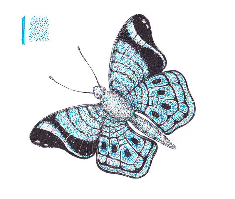 Adding color to the wings of the butterfly