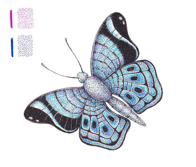 Colorful pen and ink drawing of a butterfly