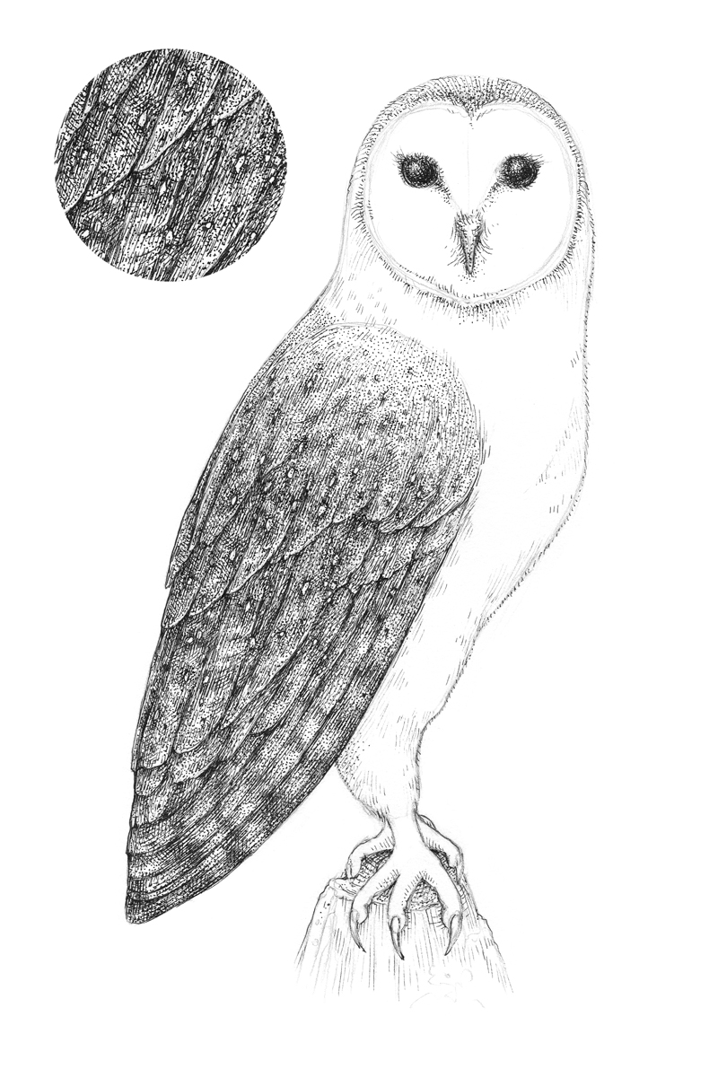 - How To Draw An Owl With Pen And Ink