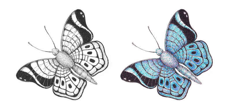 Black and white ink drawing of a butterfly next to a colorful drawing