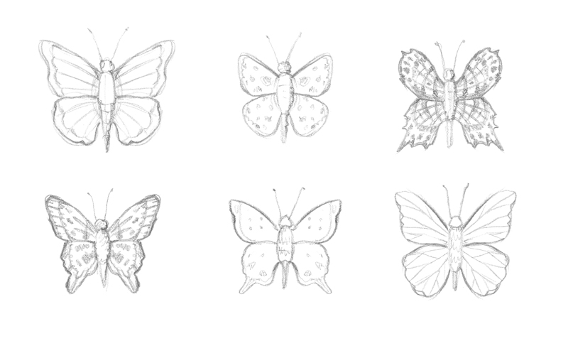 Pencil sketches of butterflies