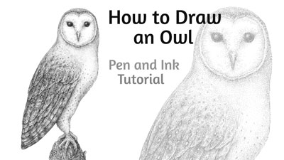 How to Draw an Owl with Pen and Ink