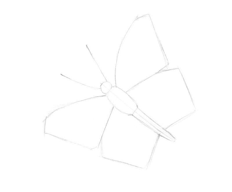 Sketching the basic shapes of the butterfly