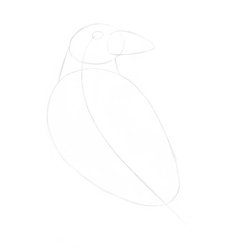 Sketching the general shape of the raven