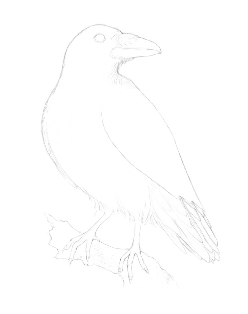 Drawing the talons of the raven