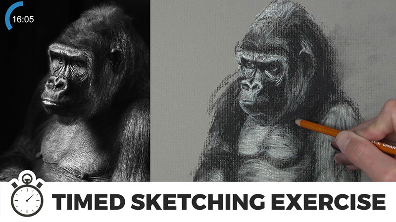 Timed Sketching Exercise - Gorilla with Charcoal