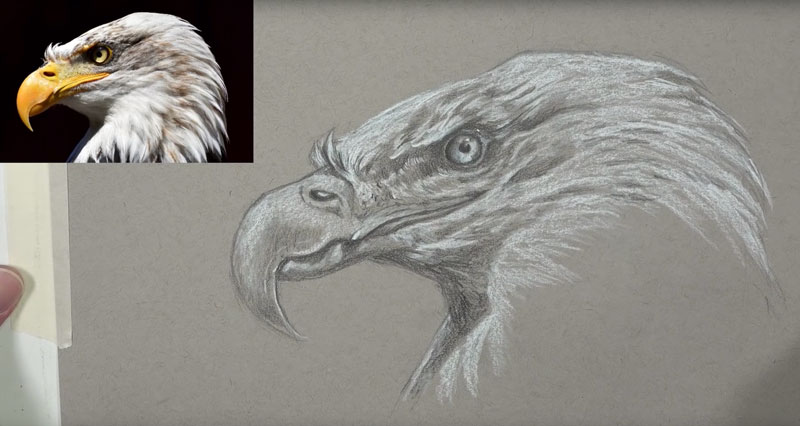 Eagle sketch on toned drawing paper