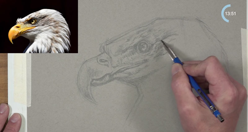 Eagle sketch - Darkening values