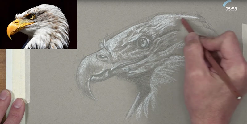 Eagle sketch - adding highlights