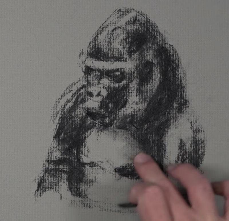 Gorilla Sketch - step 2 - Blocking in darker values