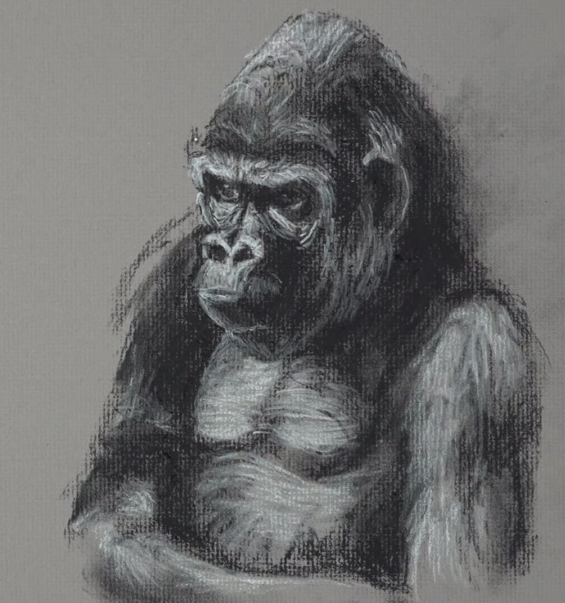Gorilla Sketch - Step 4 - Adding highlights
