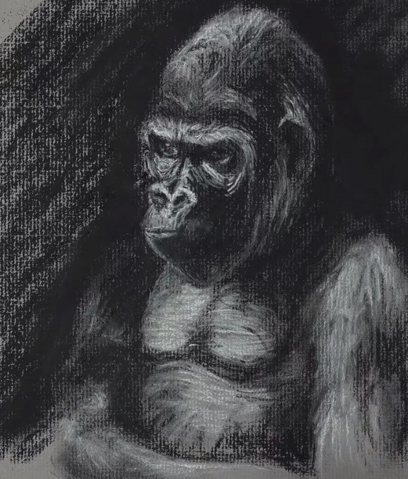 Gorilla Sketch - Step 5 - Adding the dark background